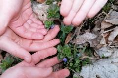 19.03.2021 Młodzi przyrodnicy z kl. II SP szukali pierwszych oznak wiosny. Wytężali wszystkie zmysł - udało się! Zobaczcie! Koordynator p. Szewczyk